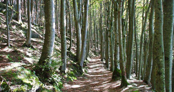 foreste sacre casentino