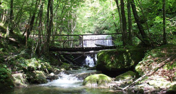 Foresta Sant Antonio